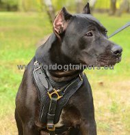 Pitbull Leather Handcrafted Padded Harness ▼
