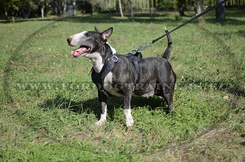 Adjustable Harness for Bulls Terriers