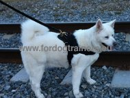 Husky Daily Usage Nylon Harness | Harness for Akita ❣