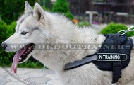 Harness with Reflective Strap for Husky and Akita ➤