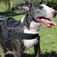 Bull Terrier Nylon Training Harness