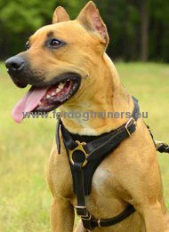 Tracking Walking Leather Dog Harness for American Pitbull ★