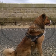 Multifunctional Nylon Harness for Collie