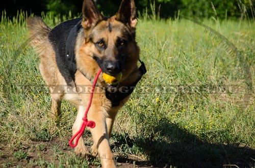 mein hund frisst steine dog harness dog muzzle dog. Black Bedroom Furniture Sets. Home Design Ideas