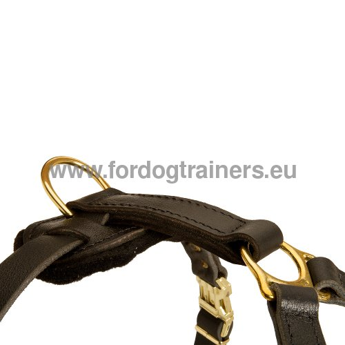 Solid Dog Harness in Selected leather
