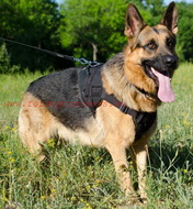 Nylon Harness for German Shepherd