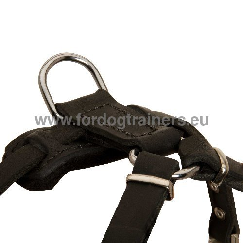 Small Dog Harness with Straps
