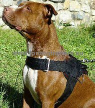 Pitbull Nylon Dog Harness for Tracking and Pulling ➠