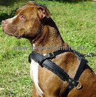Pitbull tracking harness, leather