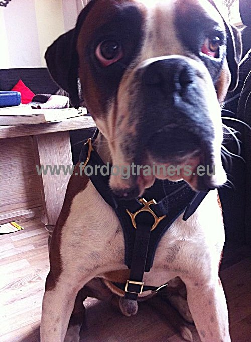Leather Harness for Boxer