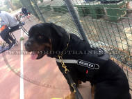 Nylon Training Harness with Patches for Rottweiler ⚅