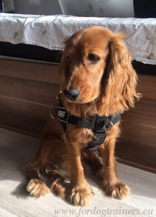 Waterproof Dog Harness for Spaniel