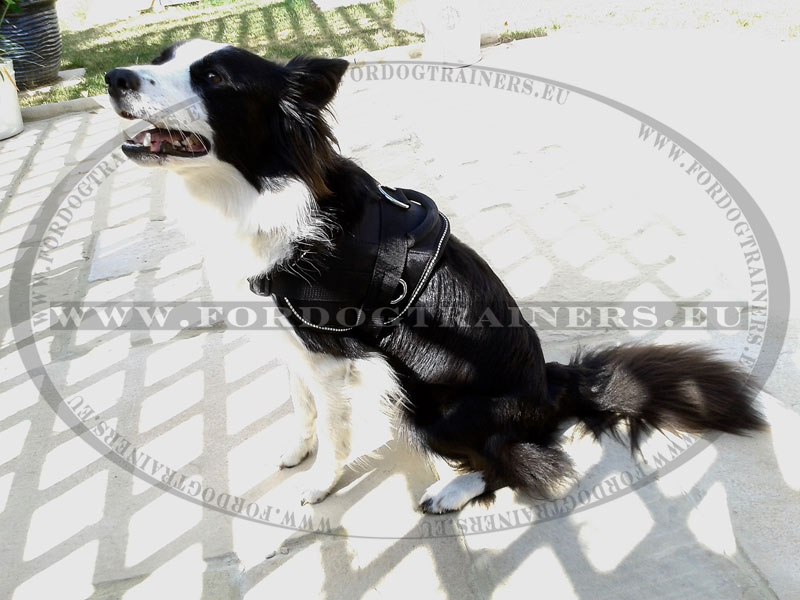 Nylon Dog Harness With Handle For Border Collie 41 2
