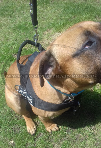 Molosser Dog Training Harness