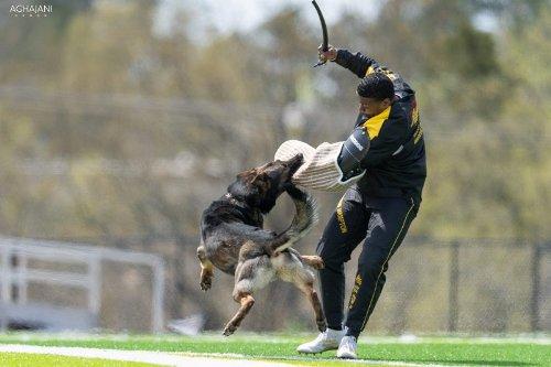 Hetzanzug fuer Schutzhund Training