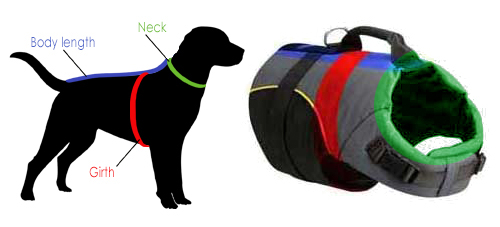 How to measure the dog for a harness