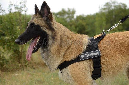 Hundegeschirr aus Nylon Identifikation