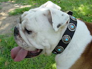 English Bulldog Collar with