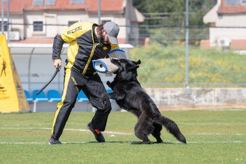 Hundetraining mit robuster Ausruestung