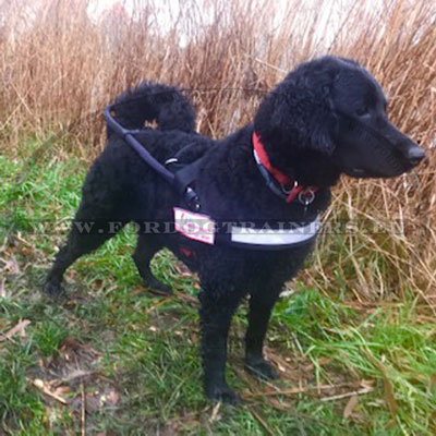 Assistance Dog Mobility Harness for Labradoodle