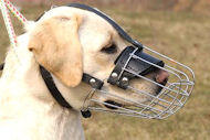 Wire Basket Dog Muzzle for Labrador