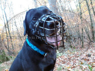 Labrador Retriever Dog Muzzle Winter Basket