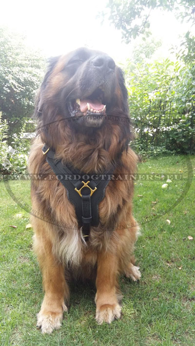 Heavy Duty Pet Harness Genuine Leather