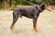 Guard Dog Training Collar for Doberman