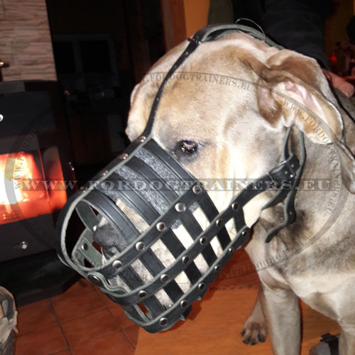 Leather Basket Muzzle for Great Dane