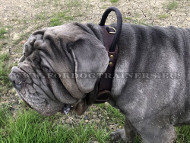Wide Leather Dog Collar with Handle for Mastino