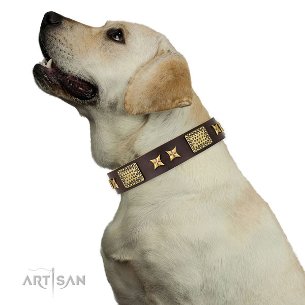 Leather Fancy Collar for Golden Retriever