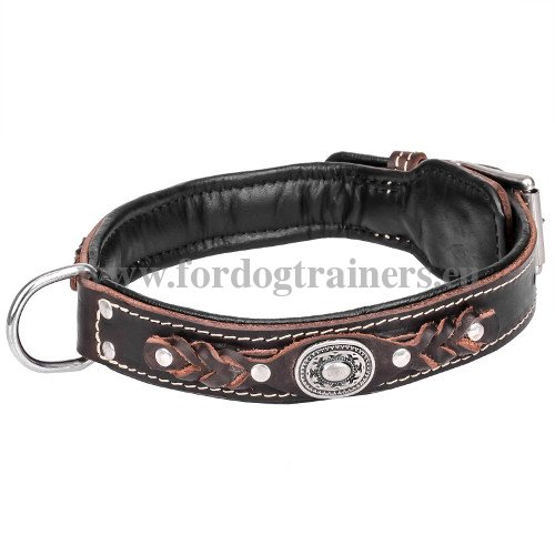 Exclusive Leather Dog Collar with Padding