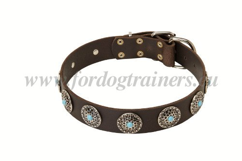 Decorated Collar for Medium Dog