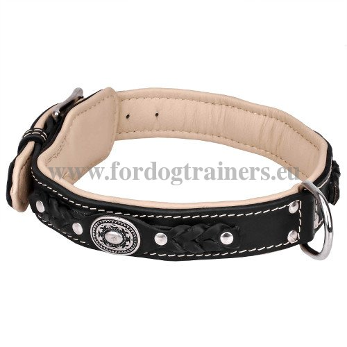 Luxurious Leather Collar for Large Dog