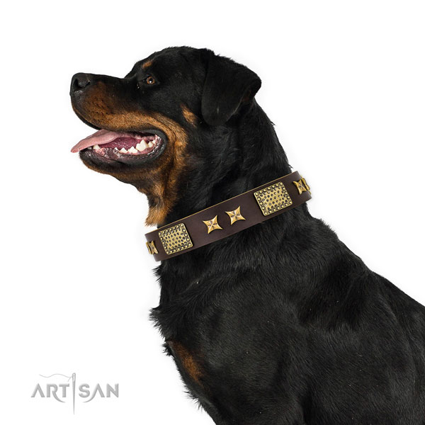 Brand Leather Collar for Rottweilers