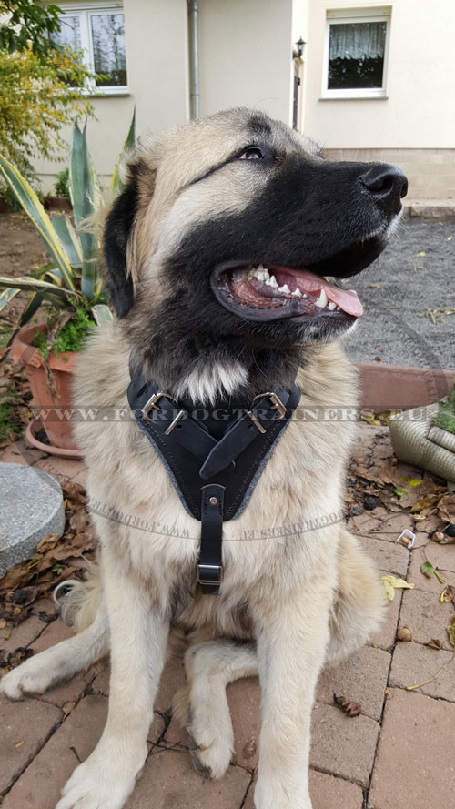 Extra Large Dog Harness