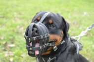 Multifunctional Leather Basket Muzzle for Rottweiler