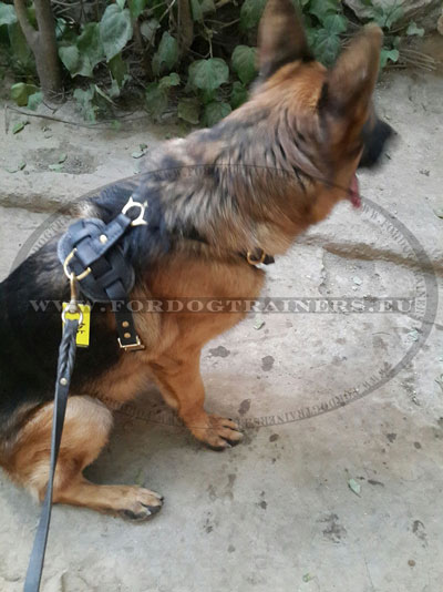 Leather Leash for German Shepherd with Braids