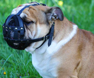English Bulldog Everyday Light Weight Ventilation Dog Muzzle