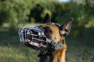 Wire Basket Muzzle for Malinois