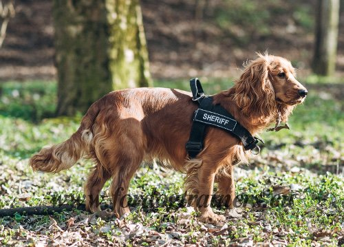 Practicable Harness with Patched for Dog Training