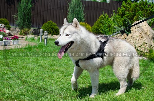 Adjustable Nylon Harness for Husky