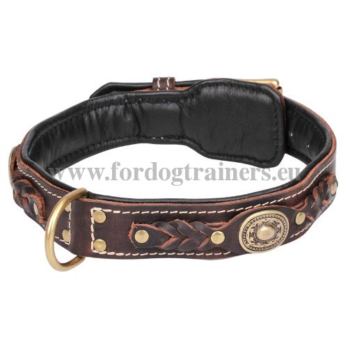 Luxurious Leather Dog Collar with Brass Buckle