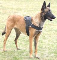 Belgian Malinois Nylon Multi-purpose Dog Harness✬