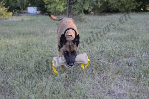 Malinois Fetching