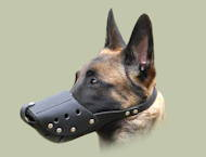 Training Malinois Muzzle