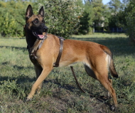 Leather Tracking Harness for Shepherd Dogs