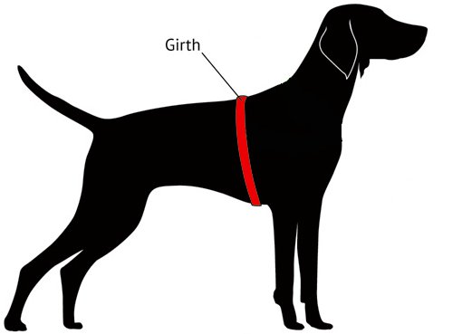 Dog Girth Sizing Diagram