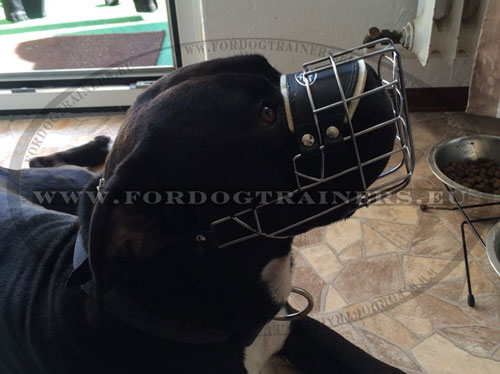 Rustproof Metal Dog Muzzle