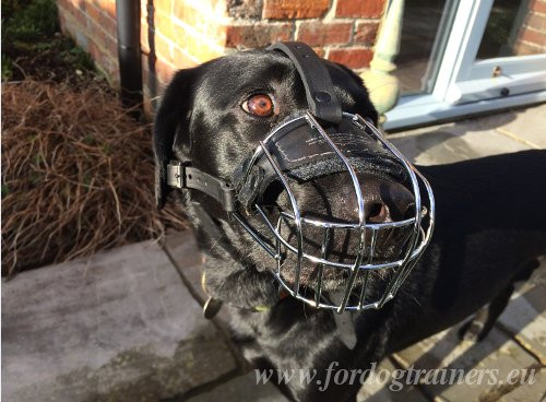 Basket Muzzle for Dog with Padding